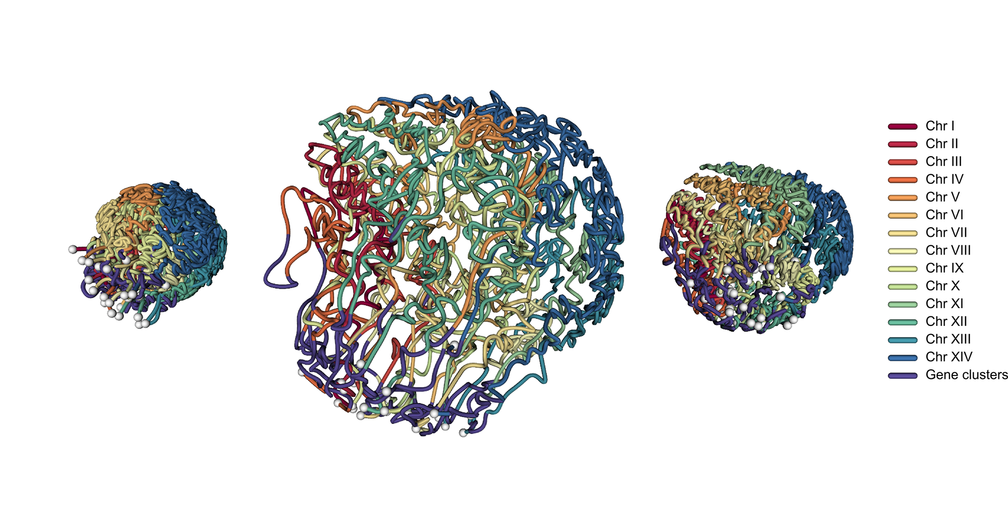 P. falciparum 3D genome organization